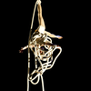 Aerial Circus and Rope Classes