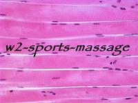 W2 Sports Massage